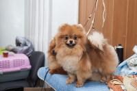 Всероссийская выставка собак 2017, Фото: 26