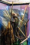 Животные: груминг и ветклиники, Фото: 6