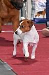 Выставка собак в Туле 26.01, Фото: 16