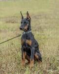Международная выставка собак, Барсучок. 5.09.2015, Фото: 47