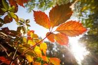 Золотая осень в Тульской области, Фото: 67