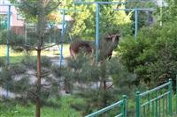 Лось во дворе дома №45 по ул. Плеханова, Фото: 30