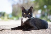 Тульские котики, Фото: 59