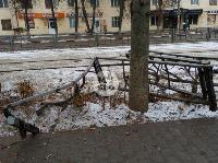 В Туле водитель Volvo снес остановку и протаранил дерево , Фото: 9
