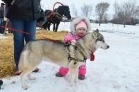 Праздник северных собак на Куликовом поле , Фото: 112