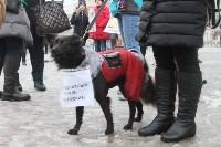 Более 8000 туляков требуют запретить убийство бездомных животных, Фото: 12