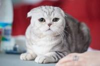 Международная выставка кошек. 16-17 апреля 2016 года, Фото: 74