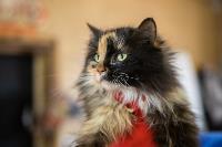 Волонтеры спасли кошек из адской квартиры, Фото: 52