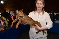 Выставка кошек в Искре, Фото: 76