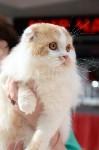 """Выставка """"Пряничные кошки"""" в ТРЦ """"Макси"""", Фото: 59"""