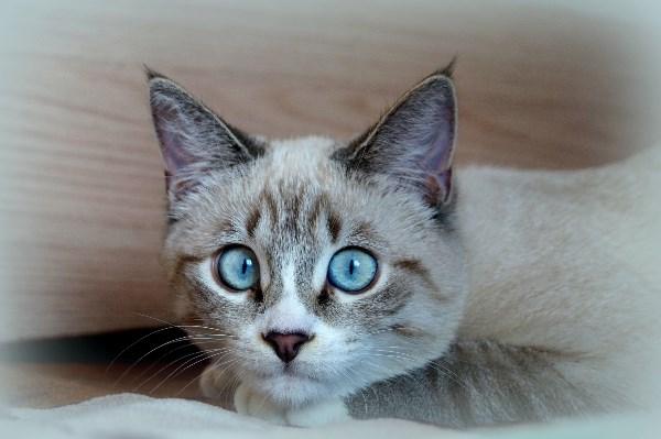 Эти глаза напротив.....