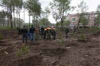 Высадка молодого леса, Фото: 43