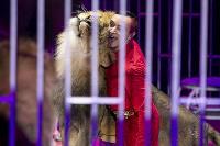 Шоу фонтанов «13 месяцев» в Тульском цирке – подарите себе и близким путевку в сказку!, Фото: 78