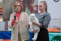 Выставка кошек в Туле, Фото: 49