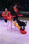 Цирк «Вива, Зорро!» в Туле , Фото: 2