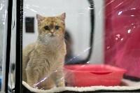 Пряничные кошки, Фото: 29