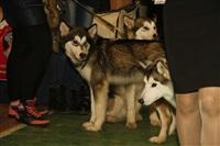 В Туле прошла всероссийская выставка собак, Фото: 54