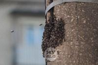 В Туле в фонарном столбе поселились пчелы, Фото: 7
