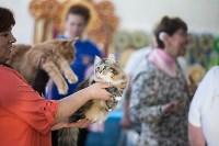 В Туле прошла выставка «Пряничные кошки» , Фото: 48