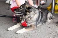В тульском «Макси» прошел благотворительный фестиваль помощи животным, Фото: 9