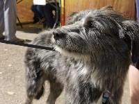 Фестиваль помощи животным в Центральном парке, Фото: 32