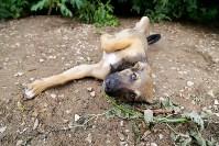 Собаки на тульской метеостанции, Фото: 1