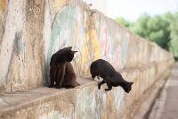 Тульские котики, Фото: 60