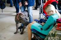 Выставка собак в Туле, Фото: 57