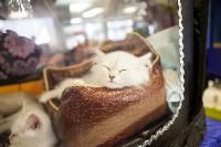 """Выставка """"Пряничные кошки"""". 15-16 августа 2015 года., Фото: 115"""