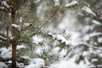 Последствия снежного циклона в Туле, Фото: 45