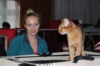 В Туле прошла международная выставка кошек, Фото: 34