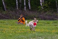 В Туле состоялись собачьи бега, Фото: 47