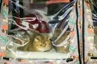 Пряничные кошки, Фото: 25