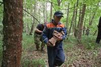 В лесу под Тулой поисковики нашли тайник с гранатами, Фото: 27