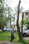Мне нужнее: в тульском дворе подрядчик самовольно вырубил 15 ясеней и забрал их себе, Фото: 3