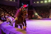 """""""Тайна пирата"""" в Тульском цирке, Фото: 39"""
