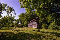 Летний день в Ясной Поляне, Фото: 12