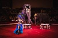 «Шоу Слонов» в Тульском цирке, Фото: 21