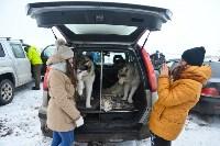 Праздник северных собак на Куликовом поле , Фото: 27