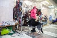 Всероссийская выставка собак 2017, Фото: 56