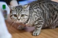В Туле прошла выставка «Пряничные кошки» , Фото: 95