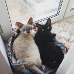 Тульские коты, которых достали хозяева на самоизоляции, Фото: 22