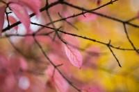 Золотая осень в Туле-2019, Фото: 20