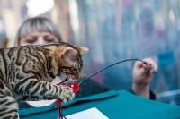 """Выставка """"Пряничные кошки"""" в ТРЦ """"Макси"""", Фото: 62"""
