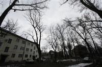 Аварийные деревья в тульских дворах, Фото: 3