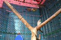 Домик в Плавске, Фото: 38