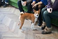 Выставка собак в Туле, 29.11.2015, Фото: 34
