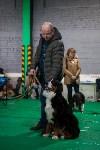 Выставка собак в Туле, Фото: 74