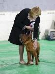 Выставка собак в Туле 14.04.19, Фото: 33