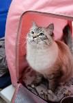 """Выставка """"Пряничные кошки"""" в ТРЦ """"Макси"""", Фото: 37"""